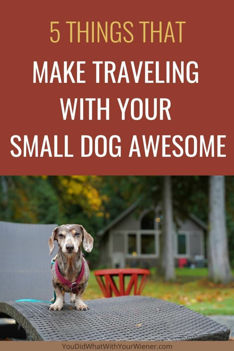 5 Times traveling with a small dog is better than with a big dog